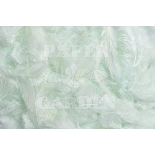Peříčka - Mint 10 g