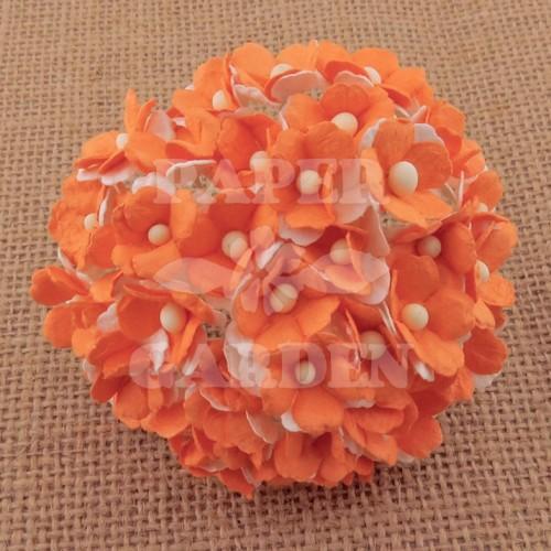 Oranžová - 10 ks