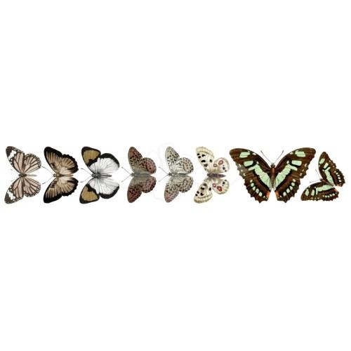 Monday - motýlci - scrapbookový papír