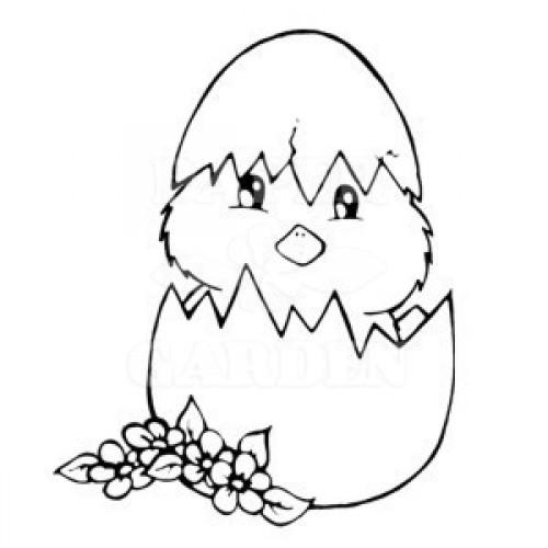 Kuřátko ve skořápce