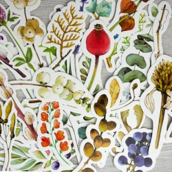 Botanica - podzim