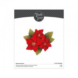 Poinsettia (Vánoční hvězda)